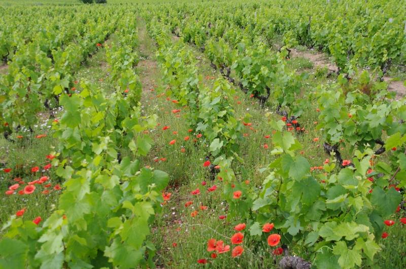 Copie de Terroir fleuri Domaine des Gandelins THEVENET